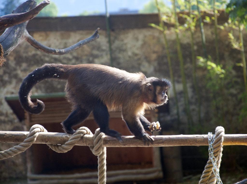 Salzburg_Zoo